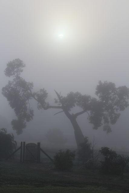 Misty morn.