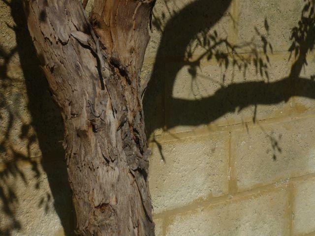 Simple shadows