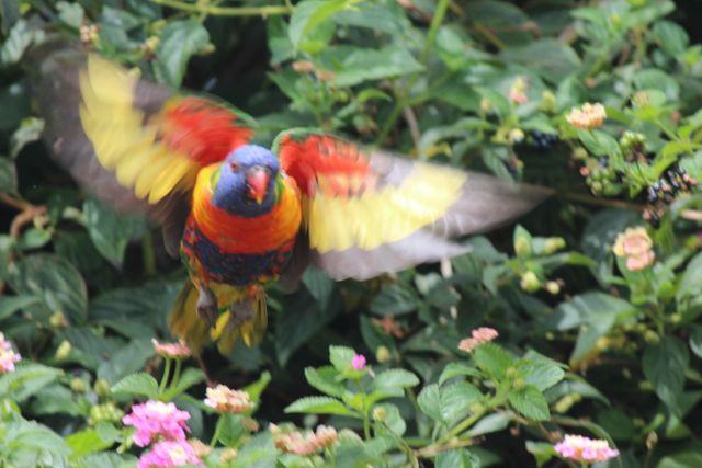 Pesky parrots 2.