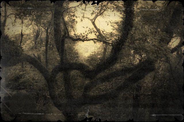 Intriguing tree.